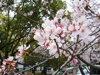 2011年04月11日_P1010221.JPG